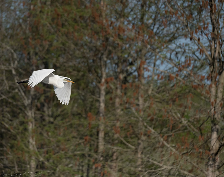 YEAR OF THE  ROOKERY 069.jpg