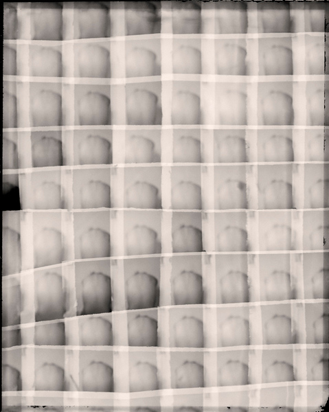 Cells_3.jpg