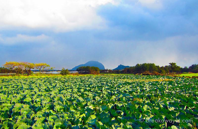 Jeju-Korea-2.jpg