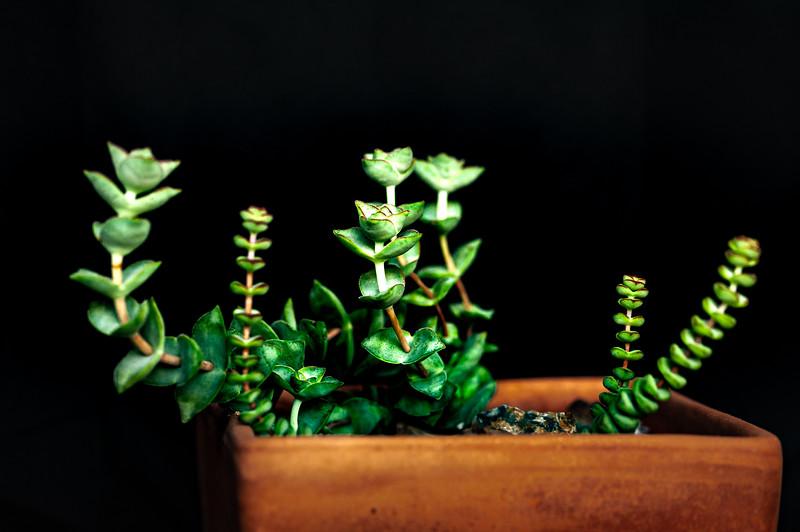 succulents 050920-3021.jpg
