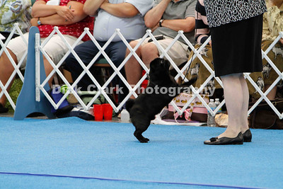 Best of Breed Group 3 Dogs