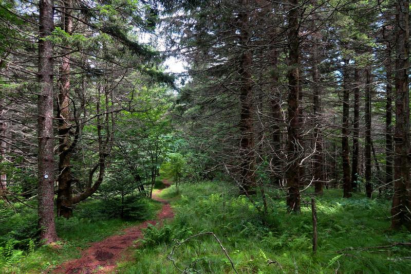 Mountains-to-Sea Trail - 5,450'
