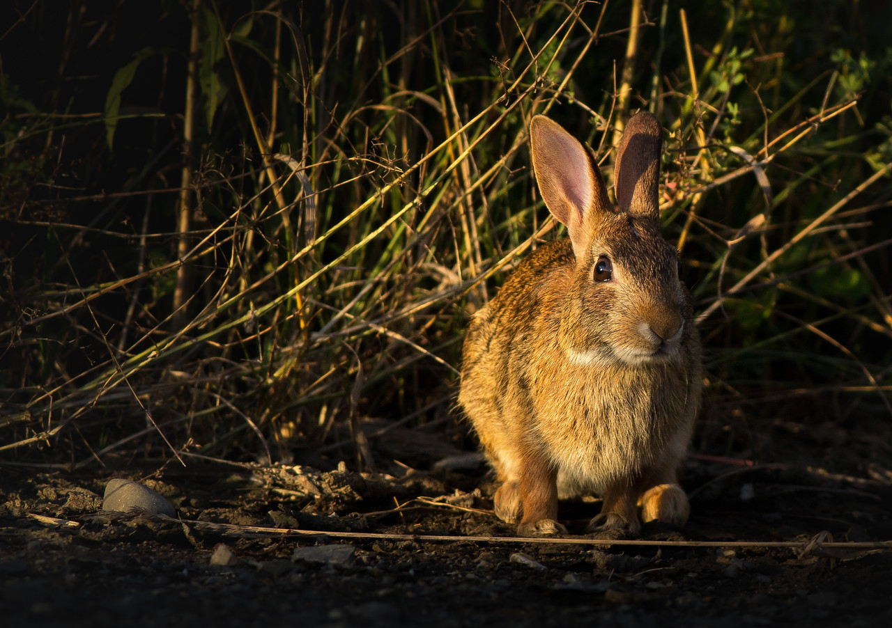 Conversations with a Hare