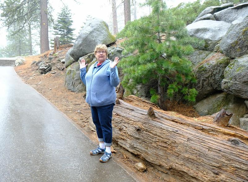 California Day 6 Sequoia 05-30-2017 140.JPG