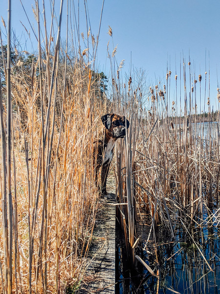 Jeff In The Reeds