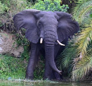 Mammals of Uganda & others - July 2018