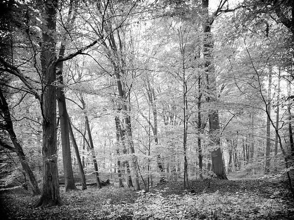 Forest Black & White