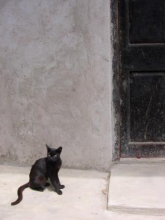 cats in lamu