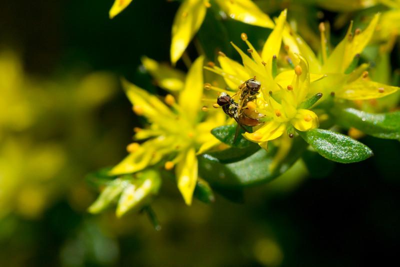 Bees_5852LowResVer2.jpg