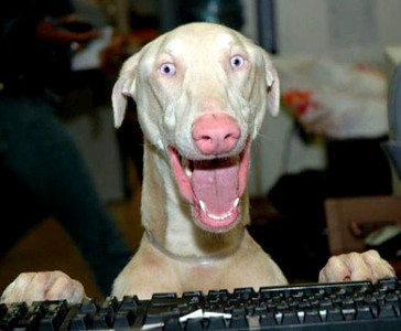 happy-dog.jpg