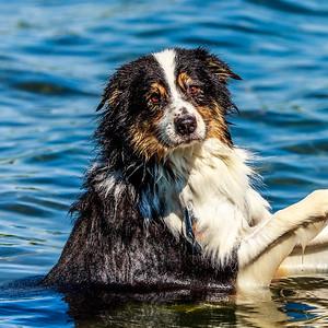 Logan in the lake