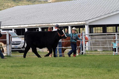 Pee Wee Beef Showmanship Sunday