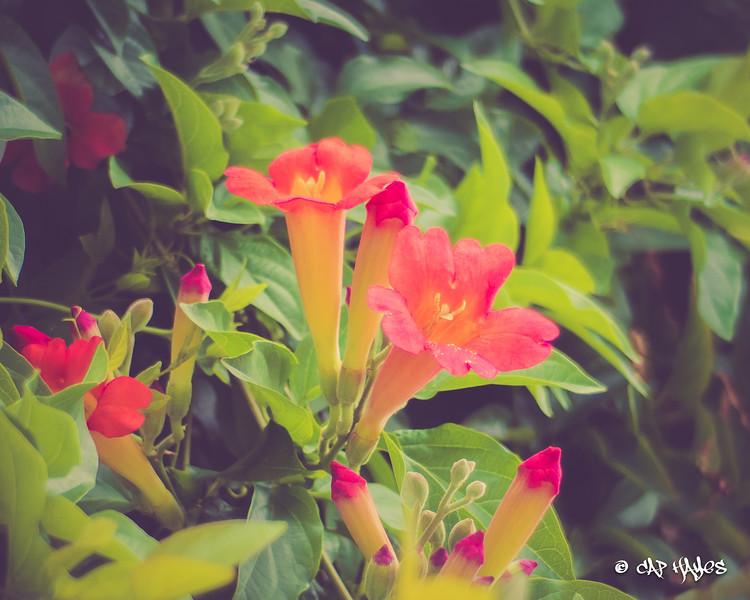 sf-flowers-0001.jpg