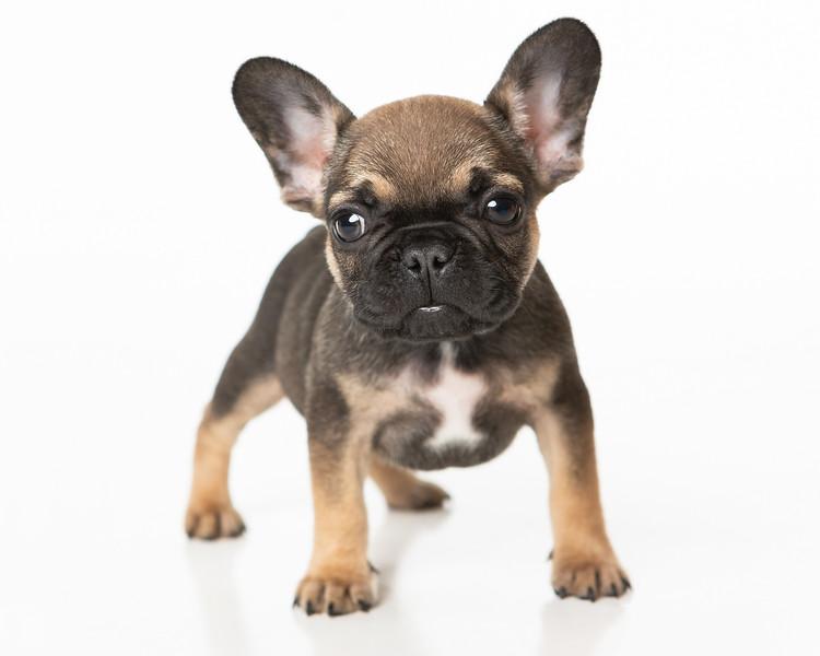 Pups-46-Edit.jpg