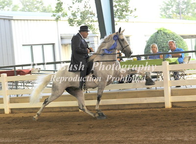 CLASS 8 SHOW PLEASURE OPEN SPECIALTY