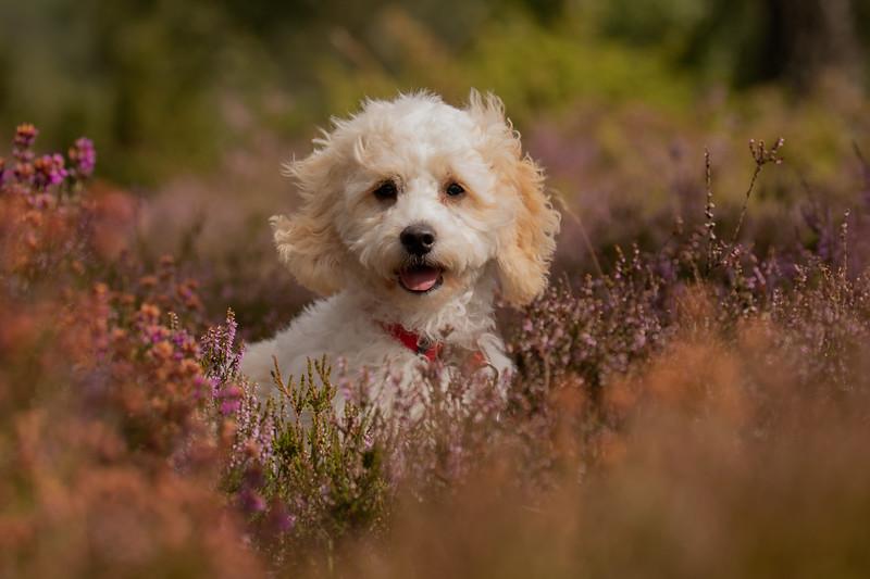 Daisy-945A8462.jpg