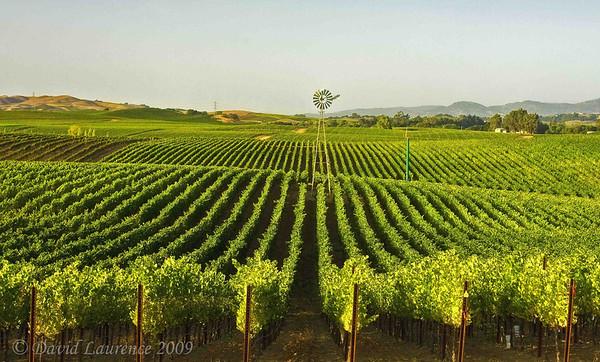 Vineyards - Summer