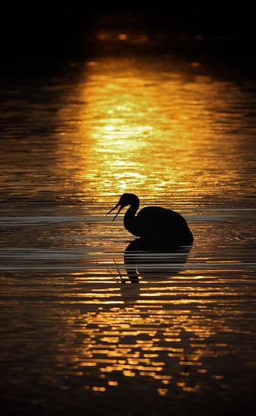 Crane keyhole sunset_0007084.jpg