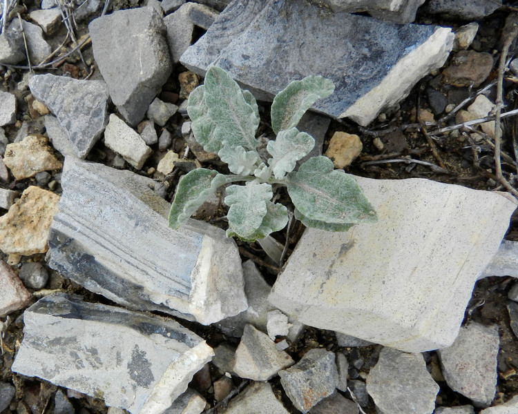 terlingua ranch 106 rocks and plant.jpg
