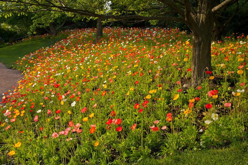 Botanic_Garden13-0772.jpg