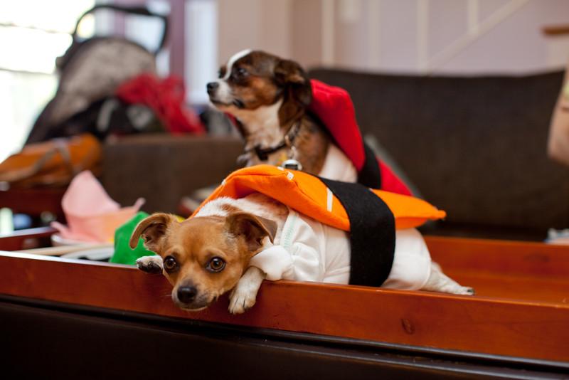 Dog-sushi-halloween2-2.jpg