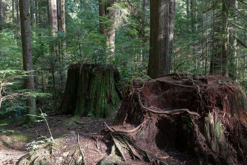 Lynn Canyon Park -  North Vancouver