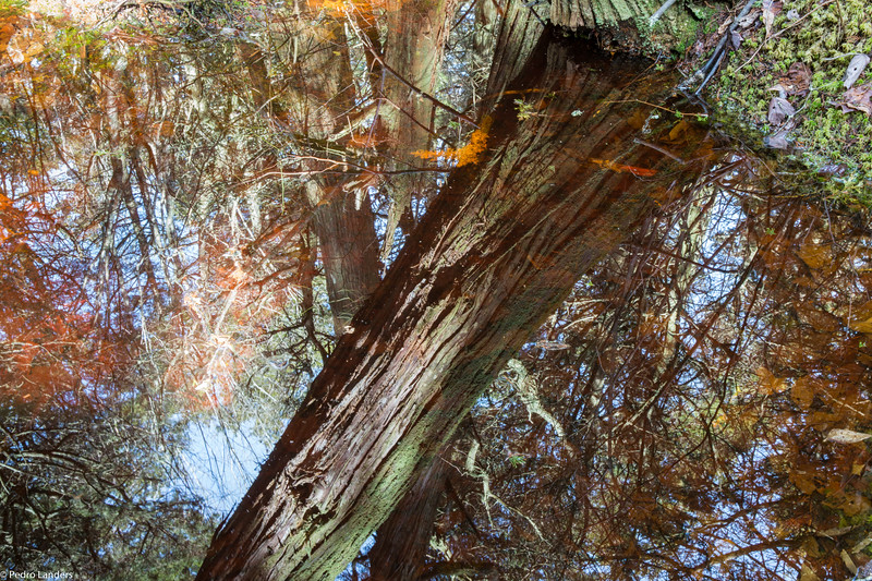 Vernal Pool Reflections