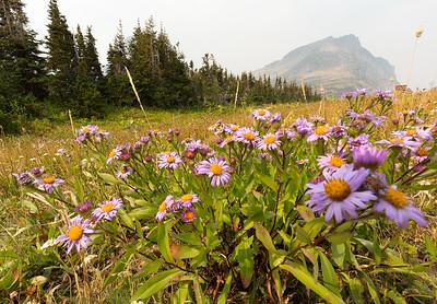 Northern Rockies Ecoregion