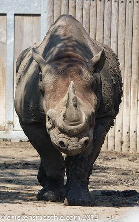 Rhinos, Elephants & Hippos