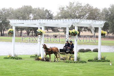 Grand Oaks Sunday: Singles Pony and Horse Pleasure Drive