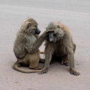 Jan 11 Ngorongoro Crater