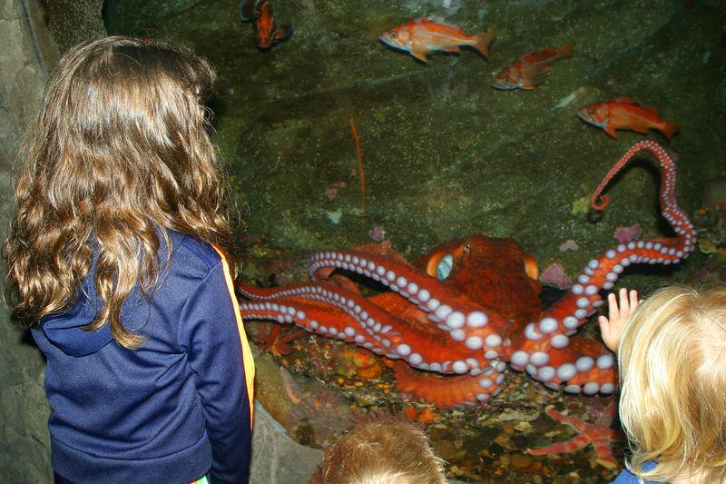 Seattle_Aquarium_26aug04 005.jpg