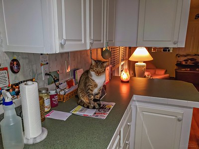 Daily sightings...2020-01-08...Cat sitting 415