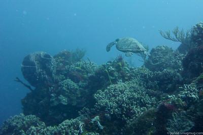 Cozumel Diving 1
