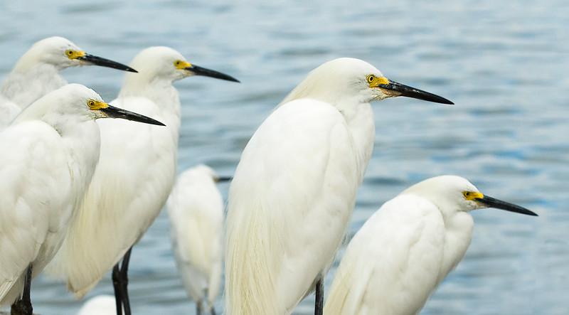 Egret-12.jpg
