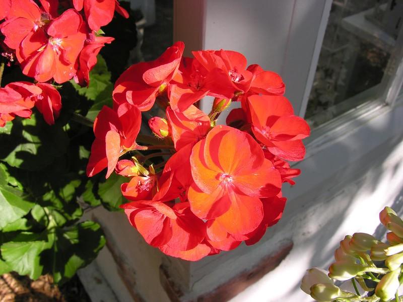 Azelea_Wilmington_2007_030.jpg