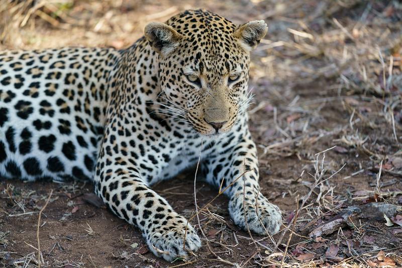 LeopardHills-20171023-1402.jpg