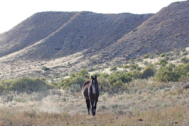 The Most Beautiful Horse On The Planet, Stormy, in Owyhee