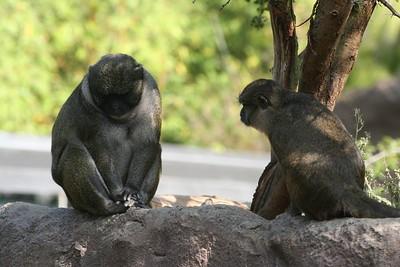 San Diego Zoo 10/27/05