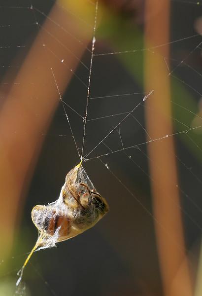 4941 Bee and Web.jpg