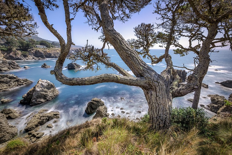 Bluff Tree and Cove, Day