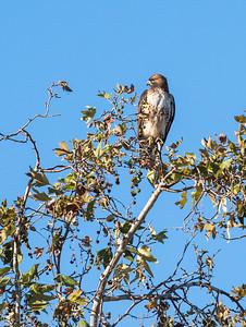 Birds at Bolsa Chica and El Dorado Parks