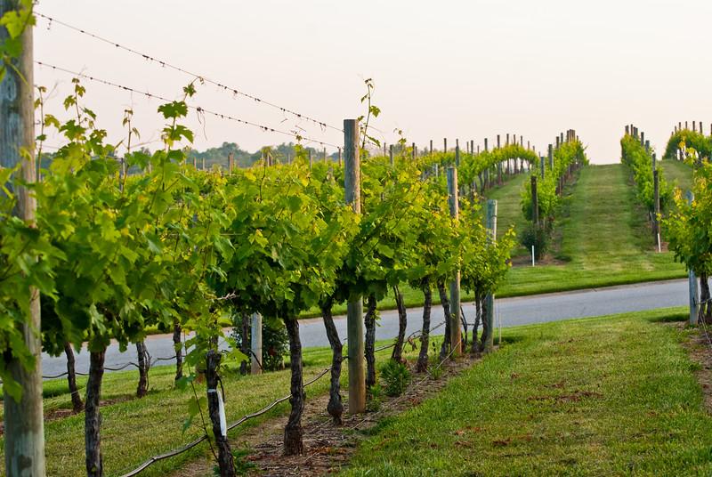Childress Winery Lexington NC (3 of 16).jpg