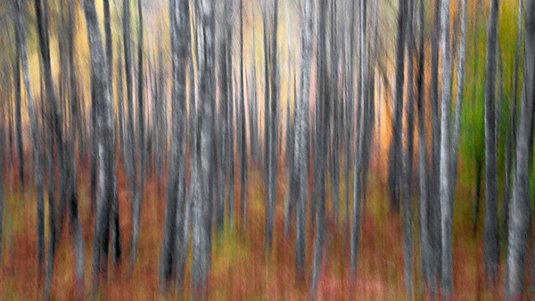 Blurry Trees