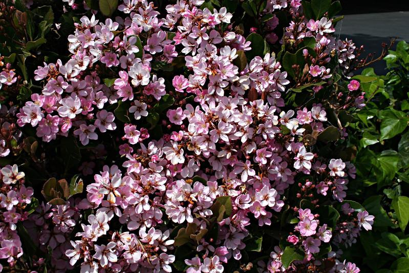 3490 Blossoms.jpg