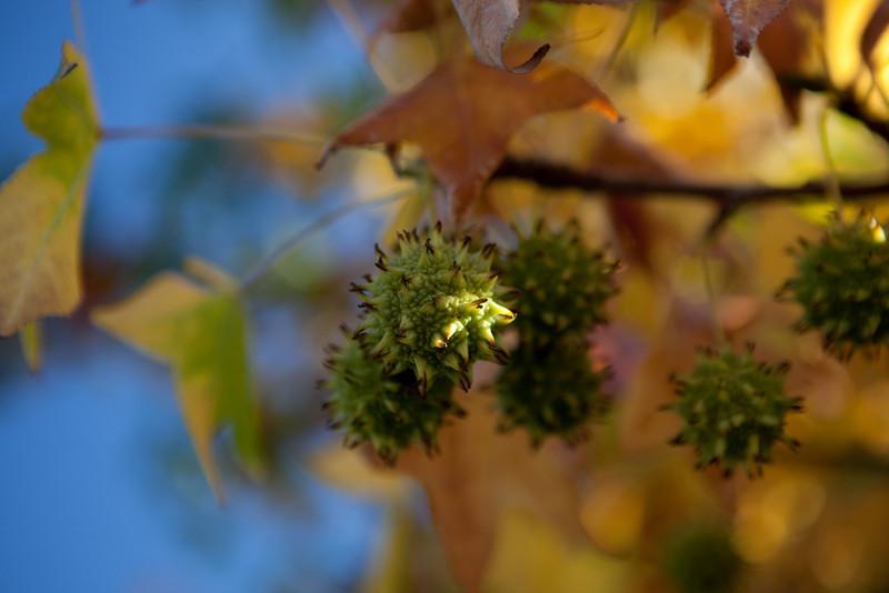 fall-3938.jpg