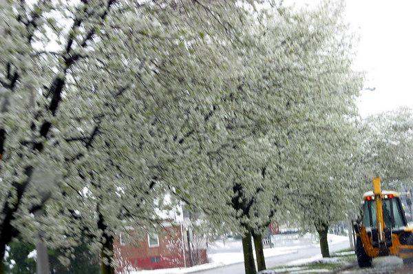 Grandin Rd. after wet snow 20030330-31
