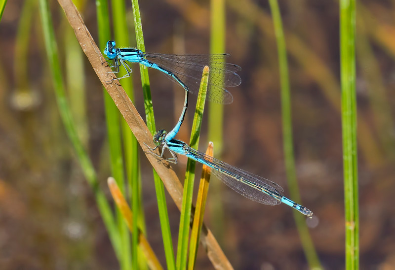Pair in tandem, Summit Bridge Ponds