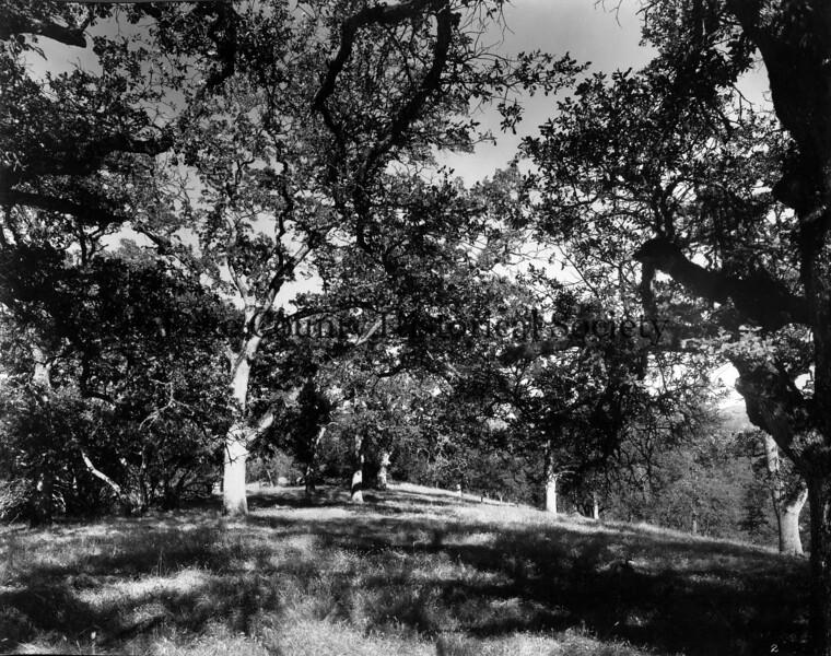 Buckingham Park -2.jpg
