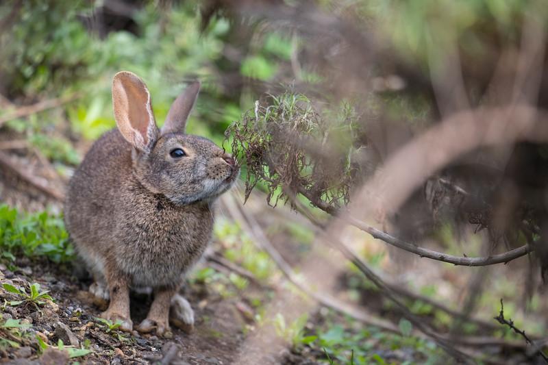 Big Sur Bunny-5808.jpg